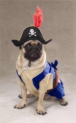 Pirate Pug Dog Costume